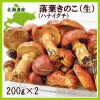 【9月上旬から出荷を開始します】 北海道で落葉きのこと呼ばれるハナイグチは、カラマツ林に発生するキノ...