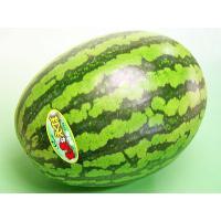 【7月中旬から発送を開始します】 まっ赤なえくぼは、北海道富良野市で生産される、楕円形の縞皮スイカで...