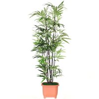 造花 観葉植物 大型 エレガンドバンブー 黒竹 180 TKD snb CT触媒