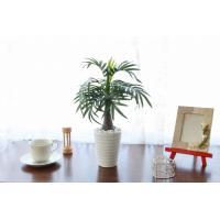 造花 観葉植物 パームツリーポット2534 テーブルヤシ CT触媒