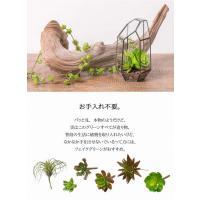 フェイク グリーン 多肉植物 /   サキュレント  80837