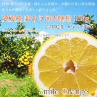 河内晩柑は、大玉の柑橘にも関わらず、果肉は大変柔らかく、 果汁もたっぷり含んでおり、食べやすい柑橘で...