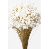 そらプリ ドライフラワー 花材 スターフラワー ミニ 白 小分け約1/3~1/4袋