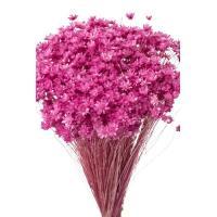 そらプリ ドライフラワー 花材 スターフラワー ミニ ストロベリー 小分け 約1/3~1/4袋