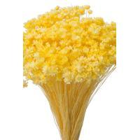 そらプリ ドライフラワー 花材 スターフラワー ミニ モーニングイエロー 小分け 約1/3~1/4袋