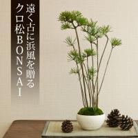 ミニ盆栽 クロ松 盆栽(bonsai ボンサイ) 翠松園 撰*o-M-bonsai_009*