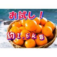 長崎のみかんを一度試してください。!!!  約1.5kgは2.0kg近くに増量する場合が多いです。 ...