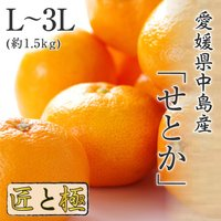 (3月上旬より順次発送) 送料無料 フルーツ ギフト 愛媛県産 せとか 中島だより 匠と極 5〜9玉 L〜3L 約1.5kg