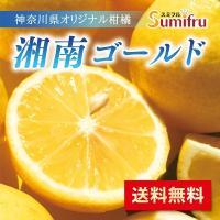湘南ゴールド 2.3kg  厳選 国産果実 果物 フルーツ 人気 送料無料 スミフル【3月下旬より順次発送】