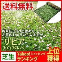 リピア(ヒメイワダレソウ)は乾燥に強く、刈込み、肥料、消毒もほぼ不要で雑草を防ぐ効果もあり、管理の手...