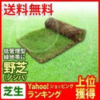 ゴルフ場ラフや公園、法面など緑化用によく使われている日本芝です。 管理があまり必要ない芝なので、低管...
