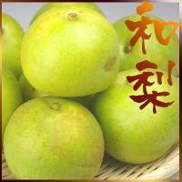 """日本梨の代表的品種""""二十世紀""""  高級感ある繊細な食感を味わう梨です  ★発送:8月下旬〜9月下旬予..."""