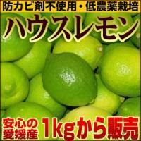 """大変希少な愛媛産""""ハウスレモン"""" 防カビ剤不使用で安心!同梱にいかがですか? 防腐剤を一切使用せず、..."""