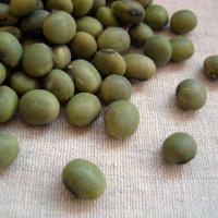 あおばた豆は青大豆の中でも最も色が濃い品種で、へそは黒目をしています。青大豆は黄大豆に比べて脂肪分が...
