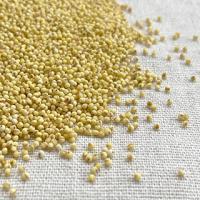 あわはイネ科エノコログサ属の雑穀です。モチ種とウルチ種があり、モチ種のもちあわはチーズのような食感に...
