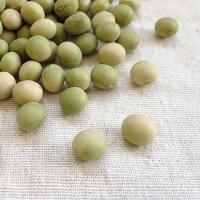 新潟県上越市の吉川地区で栽培されている在来種の青大豆です。粒の大きさは小ぶりで、主に豆腐やきな粉に使...