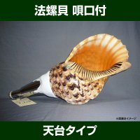 法螺貝は修験者用の道具の一つとして使用していますが、今日では和太鼓の演奏にも取り入れられたりもします...