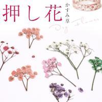 ITEM DETAIL 商品名 押し花 ドライフラワー 着色かすみ草 6色 数量   長さ約4.5c...