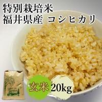 農薬使用を通常の8割減、化学肥料は無使用の特別栽培米です。 福井県産こしひかりは6年連続食味ランキン...