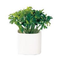 光触媒 インテリアグリーン キューブポット パセリ DQ-205 498949D ハーブ 光触媒国内加工 観葉植物 造花 人工 フェイクグリーン