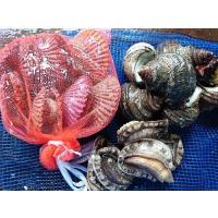 温暖な宇和海で育った活鮑(活あわび)と、ホタテ貝よりも濃厚な味わいの 活きのいい緋扇貝(ひおうぎ貝)...