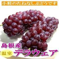 日本でもっとも親しまれている「デラウエアぶどう」の季節は、島根県から始まります。色つや良い外観で、1...