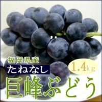 巨峰」は大きな粒に、巨大な果房、黒々した外観に、ブルームという表面に出た白い果粉も美しいブドウです。...