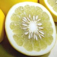 「土佐文旦」は、「文旦」の全国生産のほとんどをしめる、南国土佐、高知県の高知県特産品果実です。鹿児島...