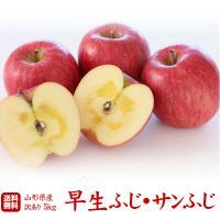 """送料無料【訳あり】山形県産りんご""""サンふじ""""5kg"""