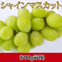 【シャインマスカット】 シャインマスカットは、糖度が高く酸味は控えめで、果肉には果汁が豊富!マスカッ...
