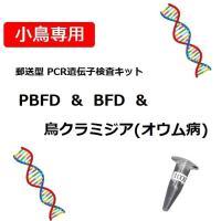 【PCR法遺伝子検査】小鳥の遺伝子検査キット BFD[APV] + PBFD + 鳥クラミジア(オウム病) 検出用