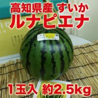 【高知県産】ブランドスイカ 夜須のルナ・ピエナ 1玉 約2.5kg  スイカ栽培では珍しい立体栽培に...