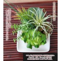 消臭効果の光触媒加工 人工観葉植物 フェイクグリーン 多肉植物 コケダマ こけだま 苔玉