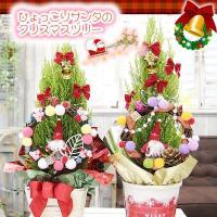 ひょっこりとクリスマスリースから顔を出したサンタさん☆お飾りがたくさん付いたクリスマスの鉢花ギフト ...