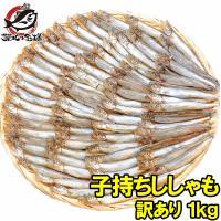 子持ちからふとししゃも  【ししゃも シシャモ 柳葉魚 ししゃも通販 ししゃも通販 ししゃもレシピ ...