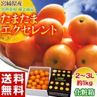 宮崎県産完熟金柑の最高峰、あの『たまたまエクセレント』が今年も登場!『たまたまエクセレント』とは、完...