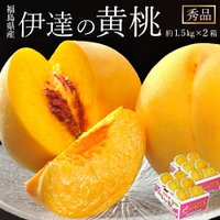 黄桃は一般的な赤い果皮の桃に比べて、全国的にも生産量が少ない桃です。その中でも福島県産は全国の市場か...