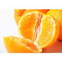 江戸時代から続くみかんのブランド産地「和歌山・有田」から 食べごろを迎えた絶品柑橘『デコポン』が緊急...