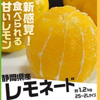 『そのまま食べる、甘いレモン!』 食べておいて、絶対に損はありません!  見た目も食べた感じもレモン...