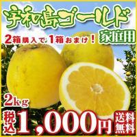 2箱購入で1箱おまけ!  宇和島ゴールドは3度味が変わる不思議なみかんです。 4月初旬〜5月中旬は「...
