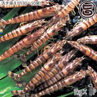 お歳暮 久米島の活き車えび 1kg(30~50尾)×1P 沖縄 人気 お歳暮 ギフト 希少 鮮度抜群 車海老 送料無料