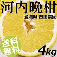和風グレープフルーツ「河内晩柑(かわちばんかん)」。文旦(ぶんたん)の突然変異種で、その生産量は日本...