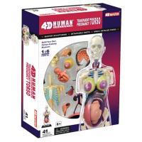 立体パズル4D VISION 人体解剖模型シリーズ(4D puzzle Human Anatomy)...
