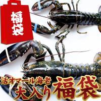 天然 活きオマール海老 えらべる大入り15,000円福袋! 新春大特価!送料無料!