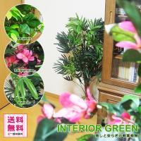 水やりや植え替えの手間がかからない人工の観葉植物(造木)です。 お部屋の隅に置くだけで、アクセントや...