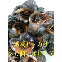 磯釣りで安価な種類の冷凍ヤドカリです。  浜名湖産で、活きたまま冷凍したので新鮮です。  解凍してそ...