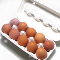 有精卵 千葉県産 小笠原農場 平飼 自然養鶏卵 送料無料 2パック