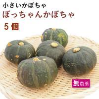 国産 坊ちゃん ぼっちゃん かぼちゃ 5個 栃木県産 無農薬栽培 送料無料