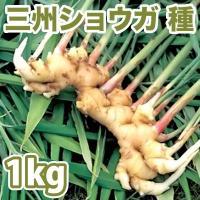 野菜・種/苗 千葉県産  三州生姜/白芽しょうが・生もの種 種生姜 量り売り1kg