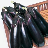 野菜の種/種子 とげなし千両二号・ナス 茄子 なす 1000粒(メール便発送/大袋)タキイ種苗